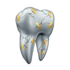 ממה מורכבות השיניים שלנו?